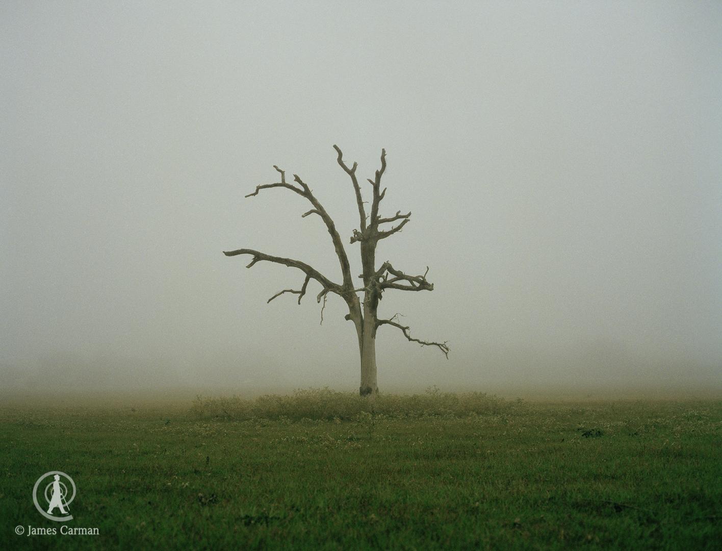 Dead Tree, Texas.